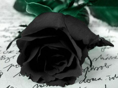 La Rosa Negra_800